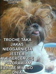 Trochę się ogarne Weekend Humor, Just Smile, Funny Cute, Motto, Good Morning, Nostalgia, Jokes, Inspirational Quotes, Education
