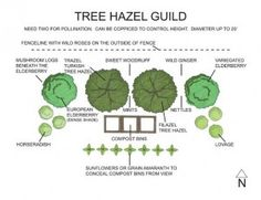 Hazel Tree Guild ~ via Midwest Permaculture                                                                                                                                                                                 More