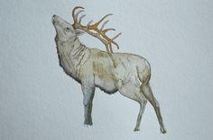 Wapiti || Original Watercolor Illustration || Elk || Bull || Antler Art || Animal Art || Woodland || by Anthropomorphics on Etsy https://www.etsy.com/listing/183936702/wapiti-original-watercolor-illustration