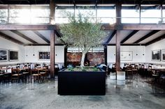 "Described by Perera as a ""monolithic piece,"" an olive tree in a planter box is located at the centre of the cafe."