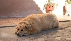 糖尿病ワンニャン急増の英国犬猫患畜数の伸び過去5年間で900超英調査