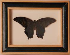 Opgezette vlinders in oude lijst - V0039