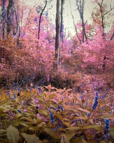Pink, Yellow, Purple Fantasy Forest 8x10 Photograph