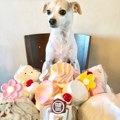 Baskin Robbins Ice Cream Cake Cream Cake, Ice Cream, Baskin Robbins, Pretty And Cute, Dog Friends, Rescue Dogs, Birthday, Custard Cake, No Churn Ice Cream