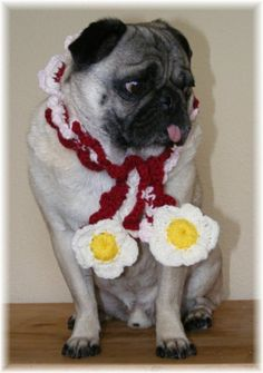 """'Bacon and Eggs Knitted Nipple Scarf"""" dog"""