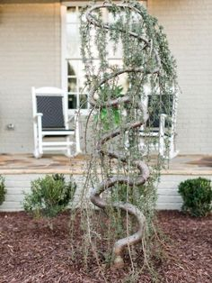 A+twisty+tree+adds+height+and+texture+to+the+manicured+landscaping+in+the+front+yard+at+HGTV+Smart+Home+2016.