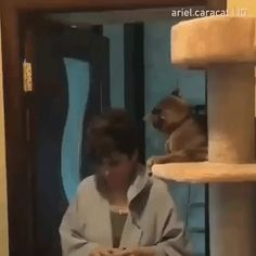 You get a smack , you get a smack . everybody gets a smack – Gif Funny Animals And Pets, Funny Animals, Cute Animals, Animal Antics, Animal Memes, Funny Cat Videos, Funny Animal Pictures, Cat Gif, Beautiful Cats