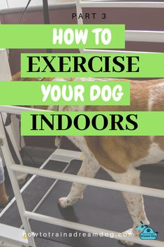 Regular exercise is SO important for your dog! Unfortunately, the weather doesn't always cooperate to make outdoor exercise possible. Get recommendations for some indoor equipment, games, and activities to workout your dog.  A well-exercised dog is a tired dog.  A tired dog equals a happy owner! Pin to save for a rainy day! Go back and read parts 1