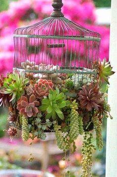 Birdcage full of succulents, Beautiful Garden Idea