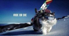 Cats and snowboards. Two awesome things combined!