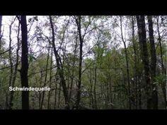 Mein Naturwunder -- im Naturpark Lüneburger Heide - YouTube Claudio Arrau, Heide Park, Youtube, World, Natural Wonders, Road Trip Destinations, Destinations, Vacation, Viajes