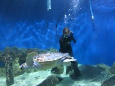 Cleaning the Sea Turtle Tank at Virginia Living Museum, Newport News VA