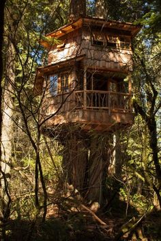 Burl Treehouse at TreeHouse Point