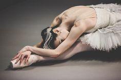 "tutu-fangirl: "" Amber Scott as Odette, The Australian Ballet © Kate Longley "" Famous Ballets, Swan Lake Ballet, Ballet Shoes, Ballet Skirt, Australian Ballet, Dance Paintings, Ballet Class, My Beautiful Daughter, Ballet Photography"