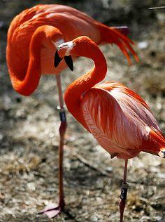 Flamingo's - Think Pink (And Orange!)