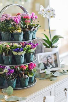 Southern Garden Party Bridal Shower Ideas- small potted flowers as guest favors. party Ideas to Throw an Indoor Garden Party Bridal Shower Indoor Garden Party, Garden Party Wedding, Beach Wedding Favors, Garden Parties, Indoor Wedding, Plant Wedding Favors, Boho Garden Party, Backyard Parties, Wedding Night