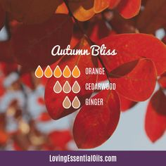 The ultimate essential oil blend software! Create your aromatherapy blends or search through our extensive list. Easily find what blends you can make based on the oils you have. Fall Essential Oils, Making Essential Oils, Ginger Essential Oil, Sweet Orange Essential Oil, Cedarwood Essential Oil, Essential Oil Diffuser Blends, Essential Oil Uses, Young Living Essential Oils, Grapefruit Essential Oil