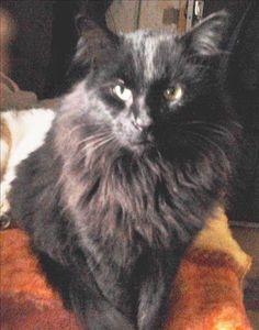 Combat - Lutter contre l'euthanasie des chats errants