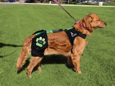 A Smart Harness for Dogs With Hip Dysplasia | Pinterest | Hip ...