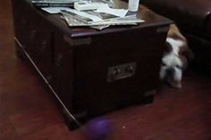 WATCH: Perpetual Motion Dog #video