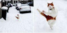 雪の中猫がノリノリでこっちに歩いてきて吹いた。