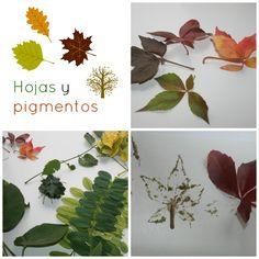 Colores que despiertan en Otoño: Pigmentos de las hojas - experCiencia