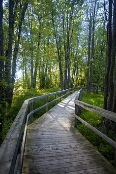 Carleton Place, Ontario straddles both sides of the other Mississippi river in eastern Ontario, a little west of Ottawa. The Mississippi Riverwalk Trail winds along the south bank of the river, bisected roughly by McNeely Avenue where it crosses the river. I shot this scene on a sunny, summer morning in August of 2015. #landscape #trees #boardwalk Carleton Place, Ottawa Valley, Forest Path, Beautiful Forest, River Walk, Old Pictures, Crosses, Mississippi, Ontario