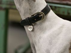Used a vintage belt (a thrift store find) to fashion a luxe dog collar.