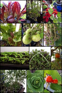 From the greenhouse...January 29, 2015