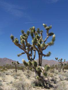 Mohave Desert, California
