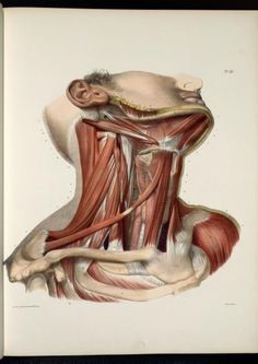 Pl. 91. Jean-Baptiste Marc Bourgery  (1797-1849 https://pinterest.com/pin/287386019948321810), Nicolas Henri Jacob. [Traité complet de l'anatomie de l'homme comprenant la médecine opératoire (1831-1854  https://pinterest.com/pin/287386019941966857/ )]. Enlarge: https://pinterest.com/pin/287386019947245275/