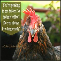 You're speaking to me before I've had my coffee? Do you always live dangerously? via The Chicken Chick®