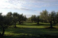 There are many places of history to visit such as Viterbo, Villa Lante in Bagnaia, Montefiascone, Civita di Bagnoregio, Bolsena, Orvieto.