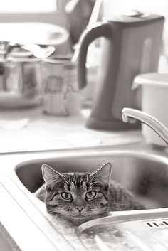 What are you sink'ing about? http://catpictures24.com/angry-cat-in-the-sink/ #AngryCat, #CatInTheSink, #CrazyCat, #CuteCat, #SinkCat, #SinkingCat