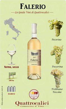 Tutti i vini e i produttori della Falerio DOC sulla Guida Vini di Quattrocalici