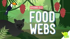 Food Webs: Crash Course Kids by thecrashcourse: Last time we put a Polar Bear in the desert and we still feel bad about that, but there's a lot more going on in ecosystems than just temperature. Fourth Grade Science, Middle School Science, Elementary Science, Science Classroom, Science For Kids, Classroom Ideas, Classroom Projects, Teaching Biology, Science Biology