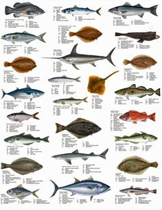 1000 images about geography science on pinterest for Nc fish and game