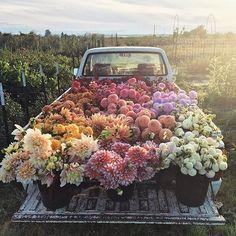 wow. sweet dreams by @floretflower #sweetdreamsdlf