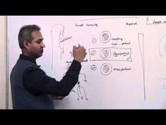 Immunology (Neutrophil) Lecture 3 Part 5