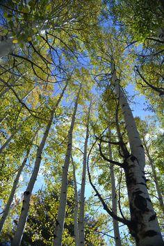 Autumn Trees, Munds Park, AZ  by Rickymac