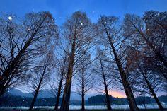 いつ行っても感動!日本にある2.4kmの「メタセコイア並木」が圧巻の美しさ! - Find Travel