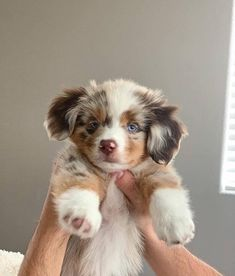 27 Cutest Dog Breeds - Most Adorable Dogs When you are looking for the best pet for your family then no one can be better than a Havanese Super Cute Puppies, Cute Baby Dogs, Cute Little Puppies, Super Cute Animals, Cute Dogs And Puppies, Cute Little Animals, Cute Funny Animals, Adorable Dogs, Doggies