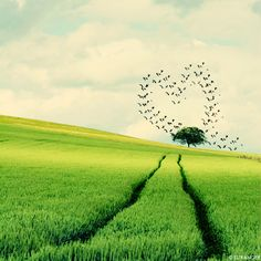 28 Beautiful Heart Shape In Nature Photos » Design You Trust. Design and Beyond.