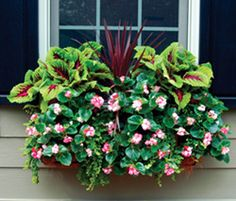 Window Box Planters...step by step guide to creating beautiful planters