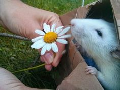They appreciate the little things in life… | 21 Reasons Rats Are Completely Unappreciated