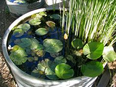 Galvanized tub turned water garden. My boys would love this with frogs!