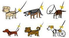 The Yellow Dog Project could save your pet's life
