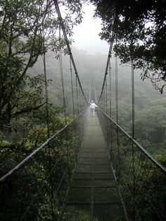 Loved hiking in the cloud forest in Costa Rica, and the zipline!