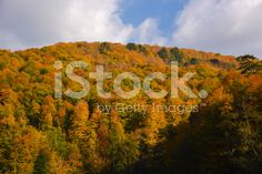 Fall trees at The Yedigoller National Park royalty-free stock photo