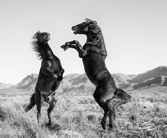 Beautiful News Wild Ones, Africa, Creatures, Horses, Animals, Beautiful, News, Savages, Animales
